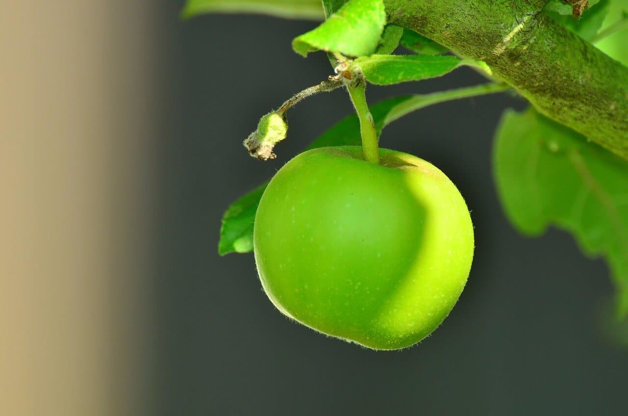 Apfel in der Ernährung