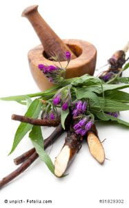 Beinwell als Heilpflanze – Inhaltsstoffe und Wirkung