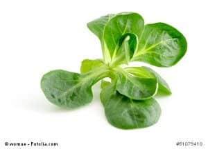 Feldsalat gegen Winterdepression – wirkt das Gemüse wirklich?