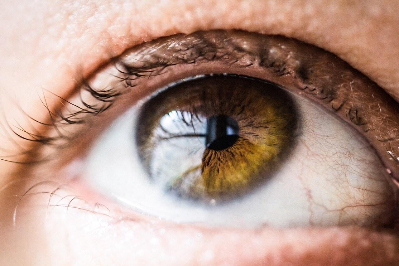 Augenlidentzündung