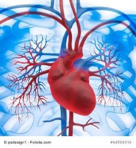 Herzmuskelentzündung erkennen – Anzeichen im Überblick