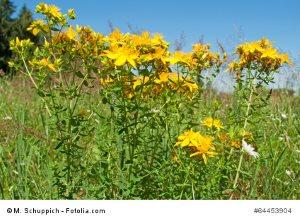 © M. Schuppich - Fotolia.com