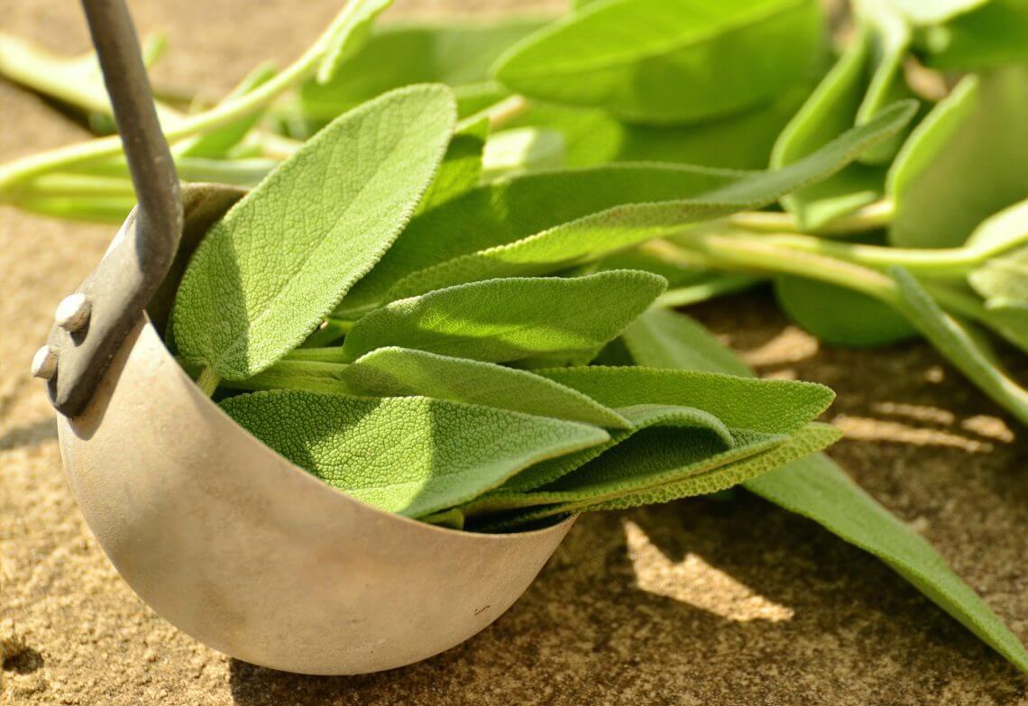 Salbei als Heilpflanze